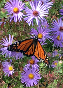 """""""The butterfly counts not months but moments, and has time enough."""" – Rabindranath Tagore"""