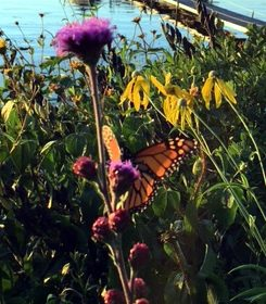 """What the caterpillar calls the end of the world the master calls a butterfly."" - R Richard Bach"